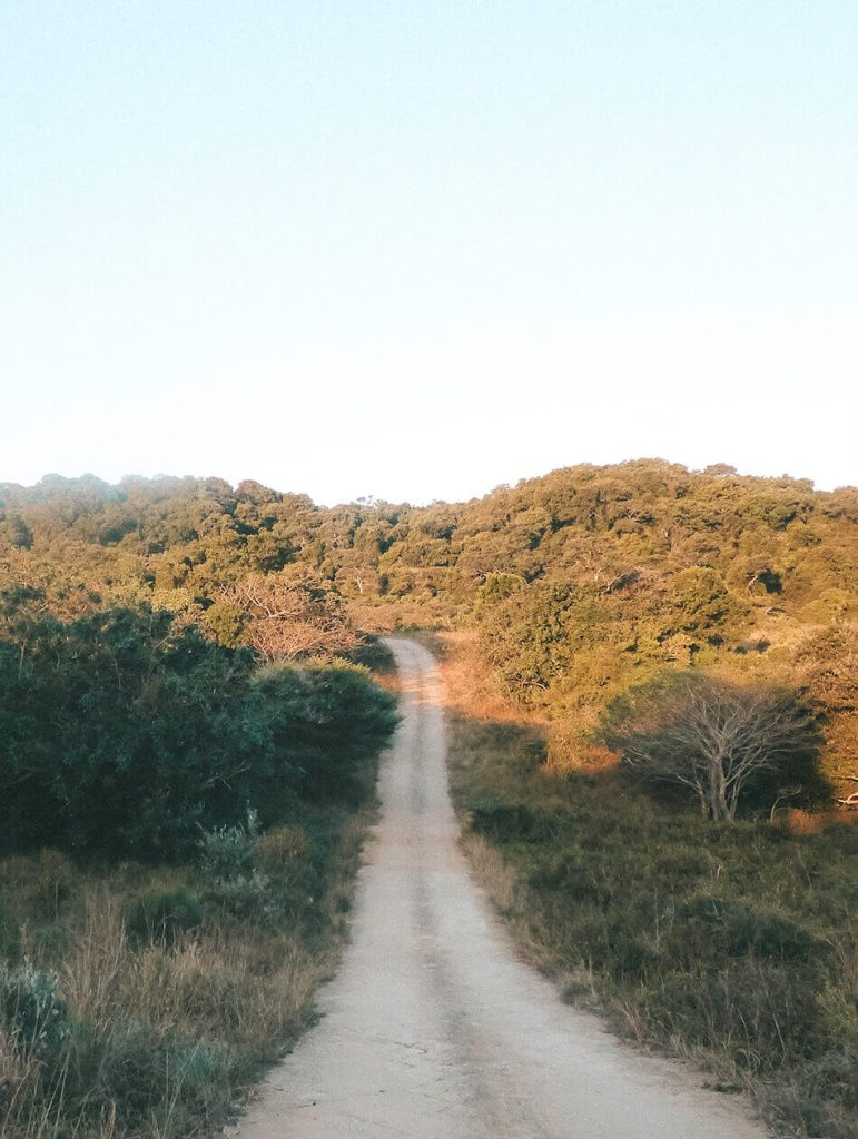 Dirt roads in Isimangaliso wetlands Game Park, South-Africa