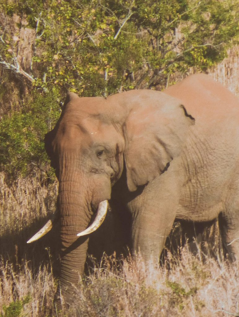 Spotting elephants in Hluhluwe Gamel Park, South-Africa