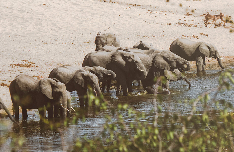 Spotting this amazingly peaceful group of elephants in Kruger National Park, South-Africa