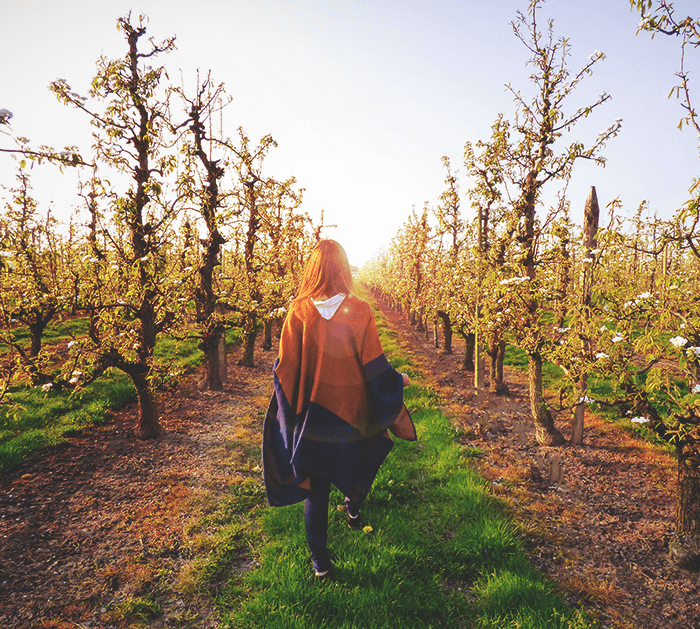 See the blossoming orchards in beautiful Belgium