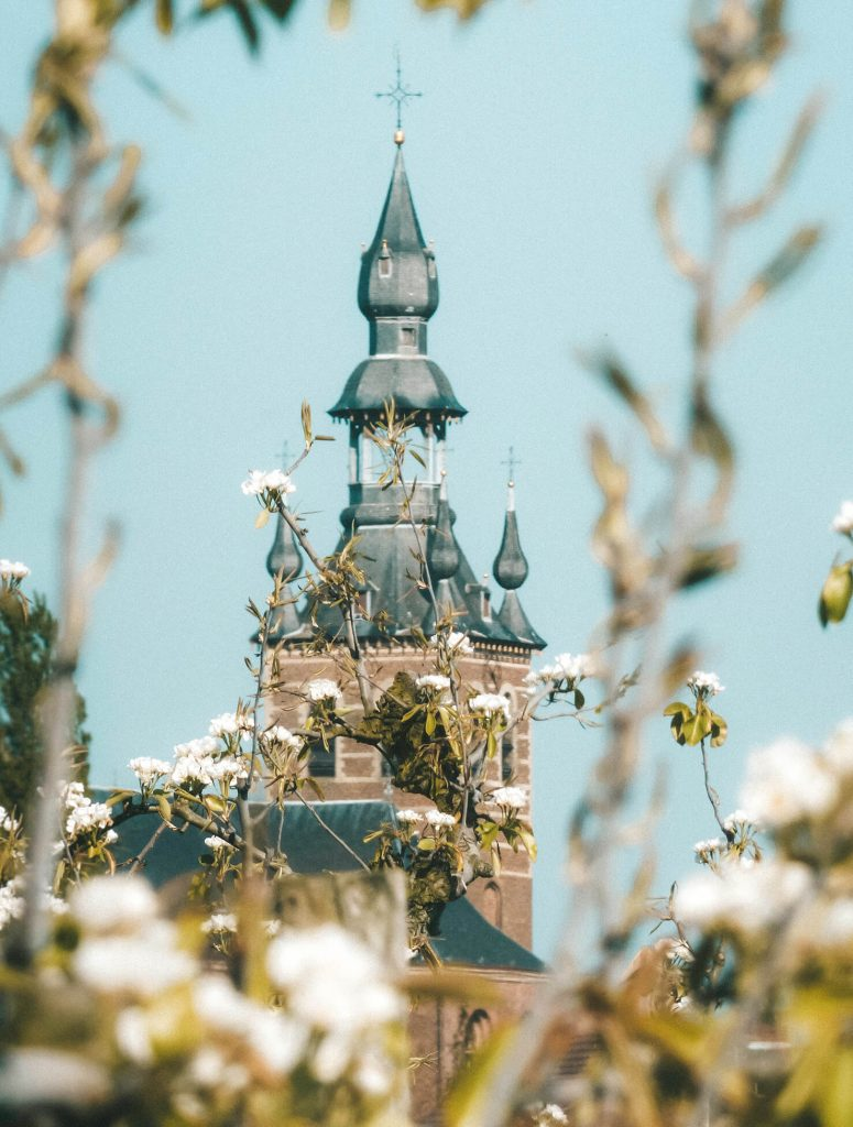 churches peaking through the blossoms near Sint-Truiden