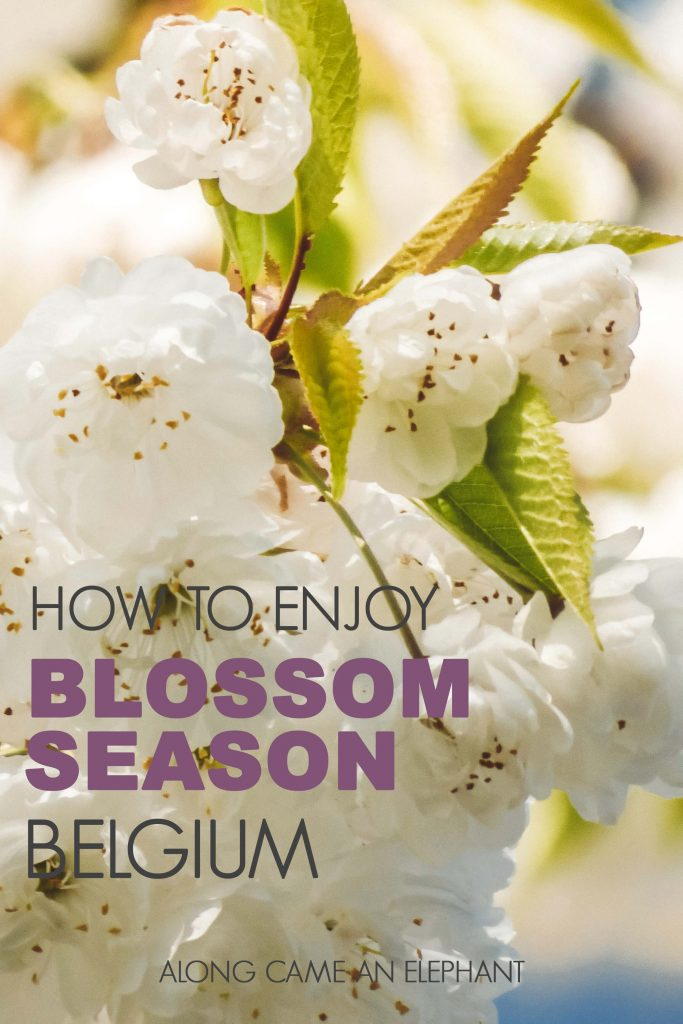 How to enjoy the blossoms season in Belgium