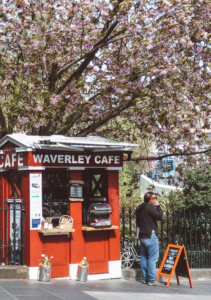 Cherry blossoms in Edinburgh