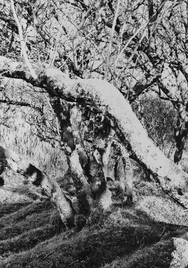 Mystical allure in the Fairy Glenn on the Isle of Skye