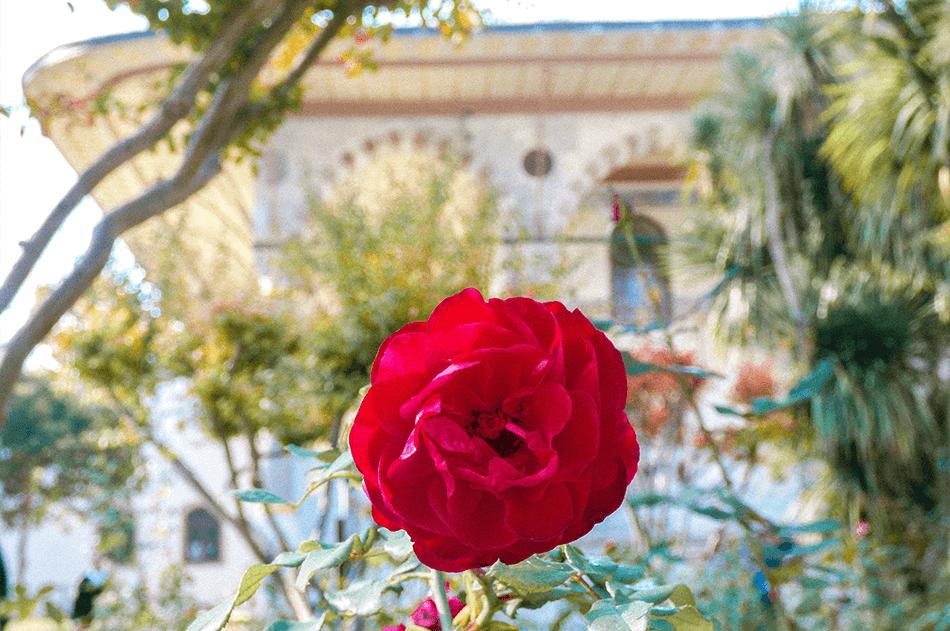 Lush rosegarden at the Topkapi Palace in Istanbul