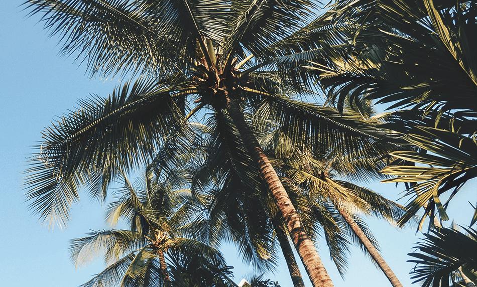 Lush palmtrees bring shade from the hot sun in Maison Dalabua, Luang Prabang