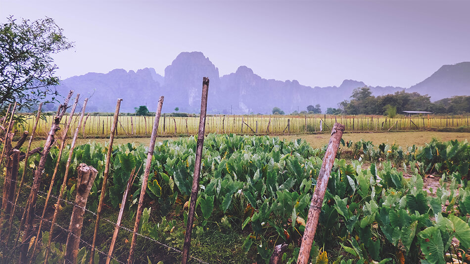 Lush landscapes and limestone mountains in the background