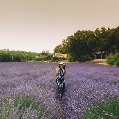 Visiting lavender fields in the Provence