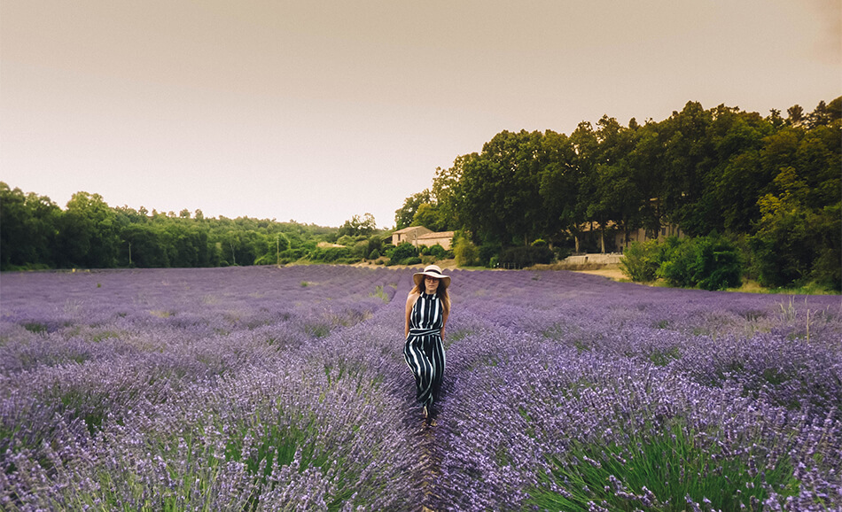 By planning we were able to spend a long weekend in the Provence during lavender season!
