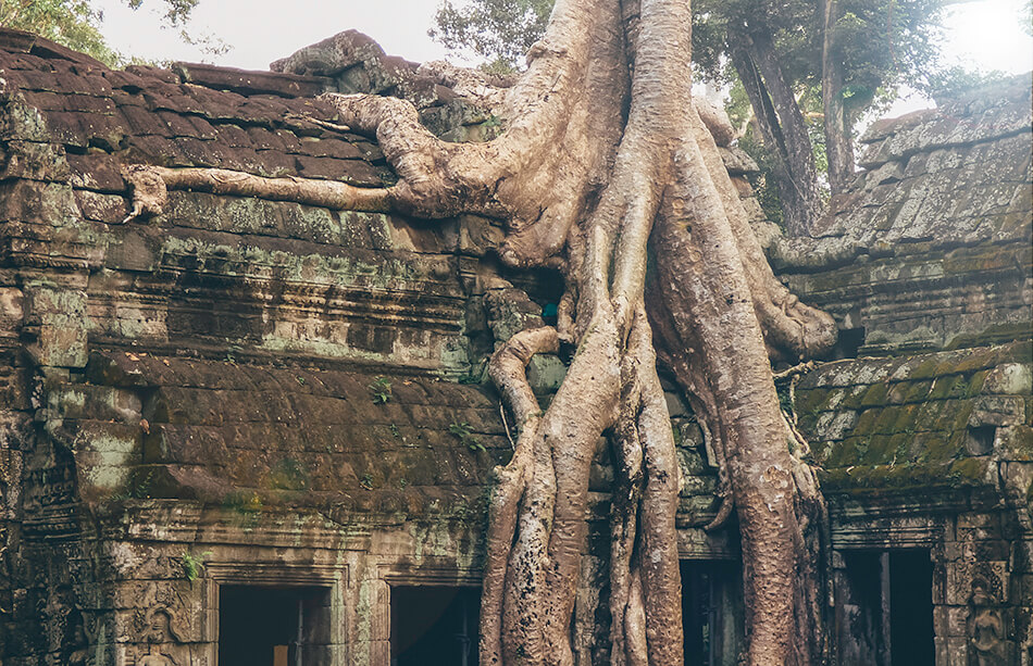 The Ta Phrom or Tomb Raider temple is almost completely devoured by the Cambodian jungle