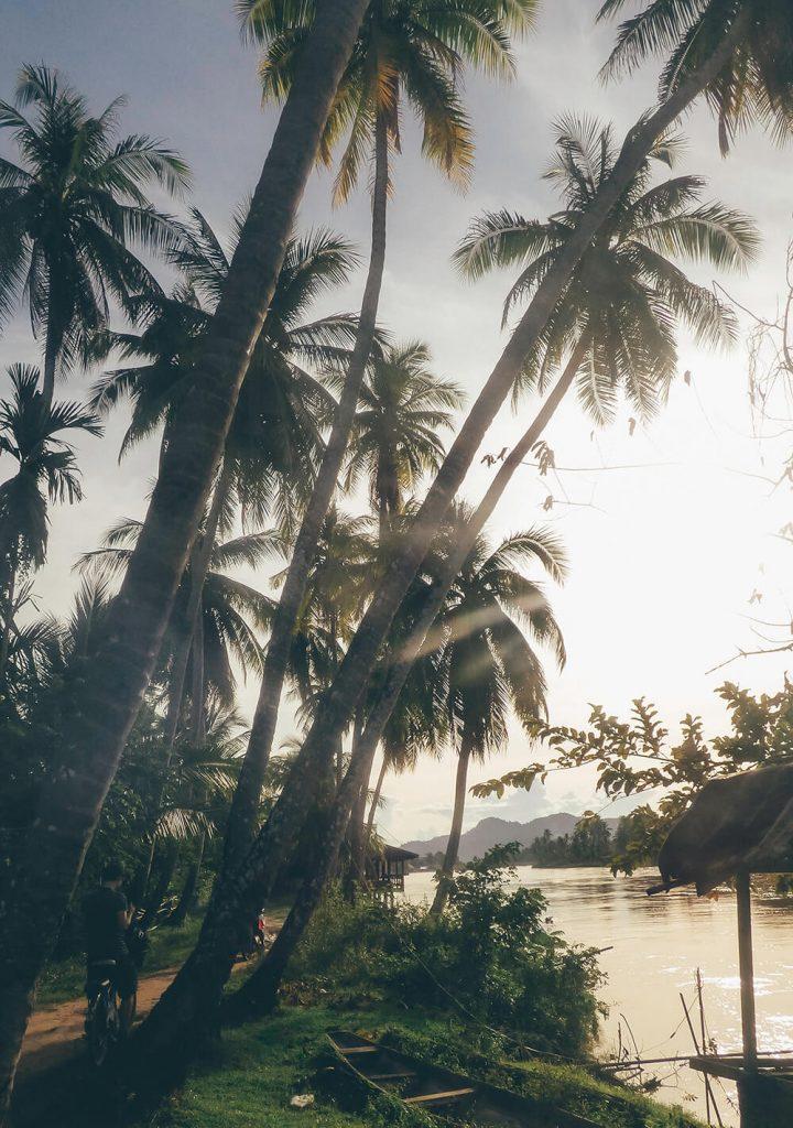 Palmtrees on Don Khone island