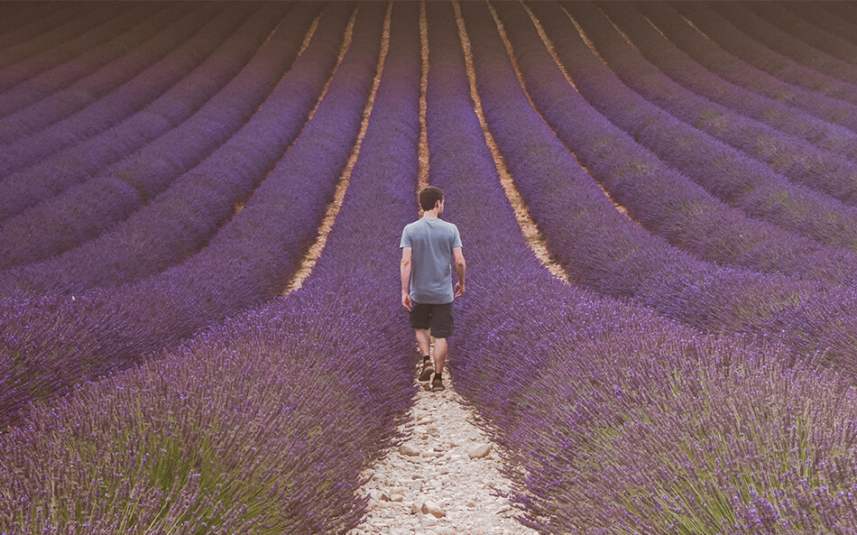 Visiting lavender fields in the Provence, France