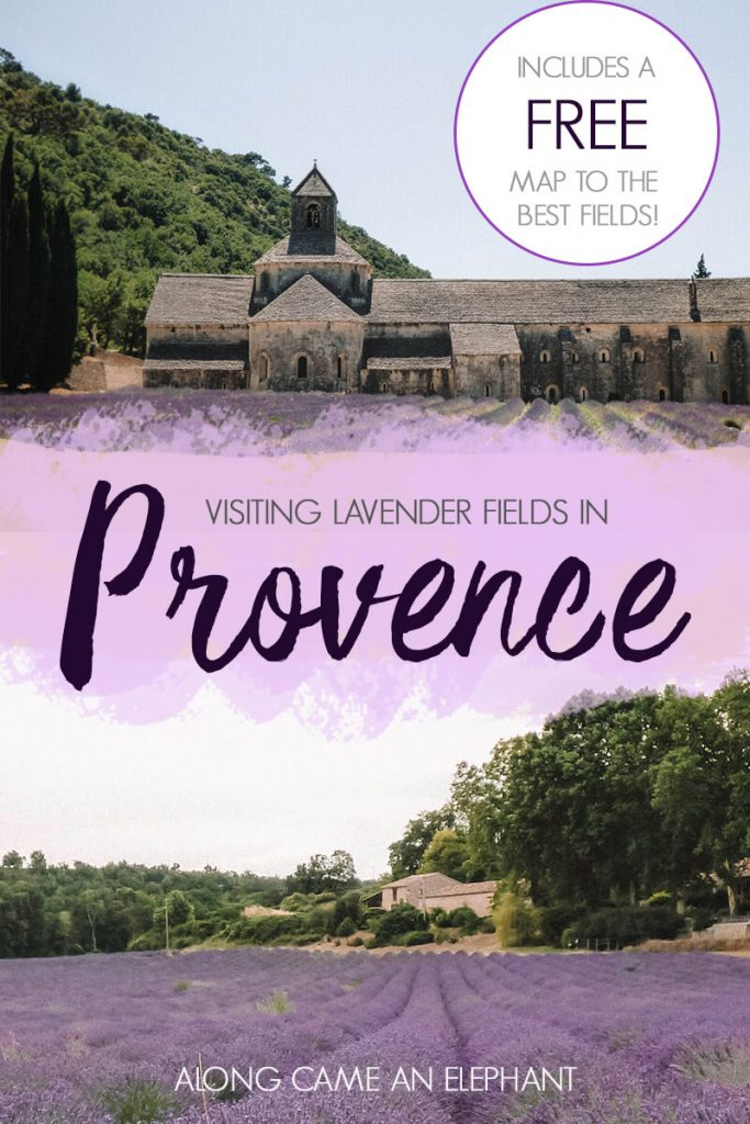 How to visit the lavender fields in the Provence, France. Includes a FREE map with the best lavender fields ans our lavender road trip route. #lavender #france #provence #roadtrip