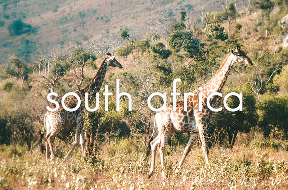 All our post about South Africa