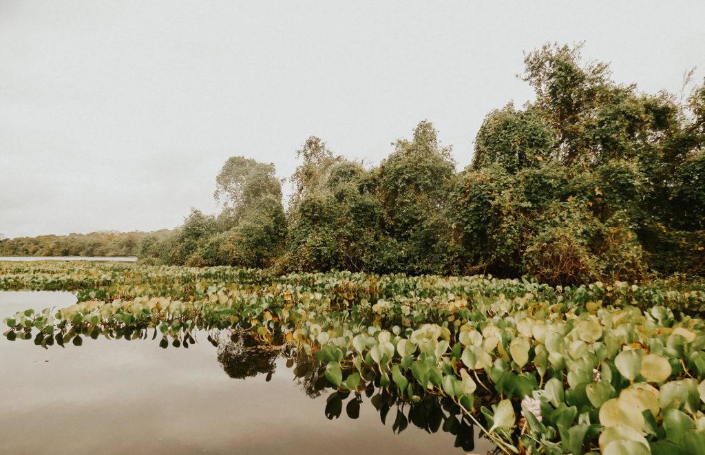 Kayaking the Pantanal during our 3 week trip through Brazil
