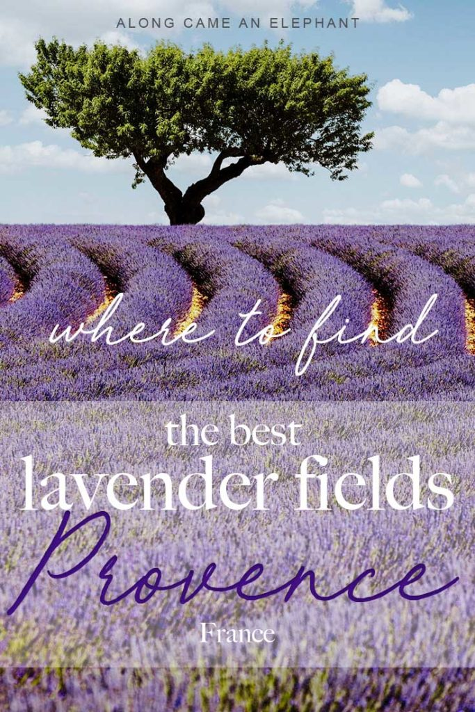 Heading to France for a road trip or to explore the Provence lavender fields? You're at the right place! This Provence travel guide gives you the low down on the best lavender fields in Provence, France and where to find them.