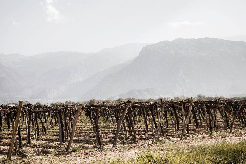 The best Cafayate wineries: a guide to Argentina wine tours