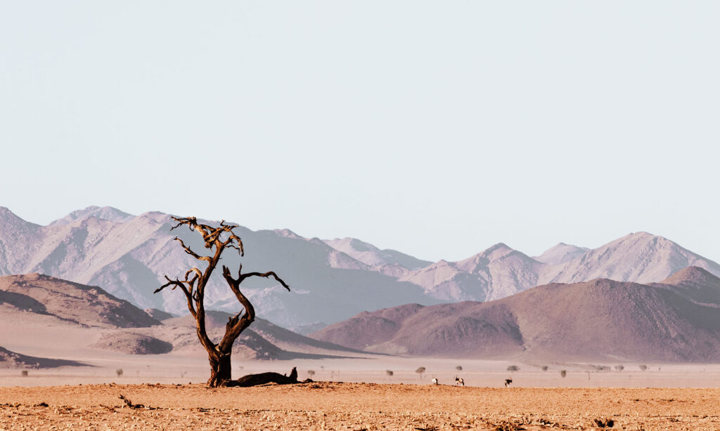 Namibia off the beaten path: dead tree in a dried up river bed that looks like Deadvlei