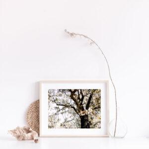 Gift Boxed Blossom Tree Photographic Print