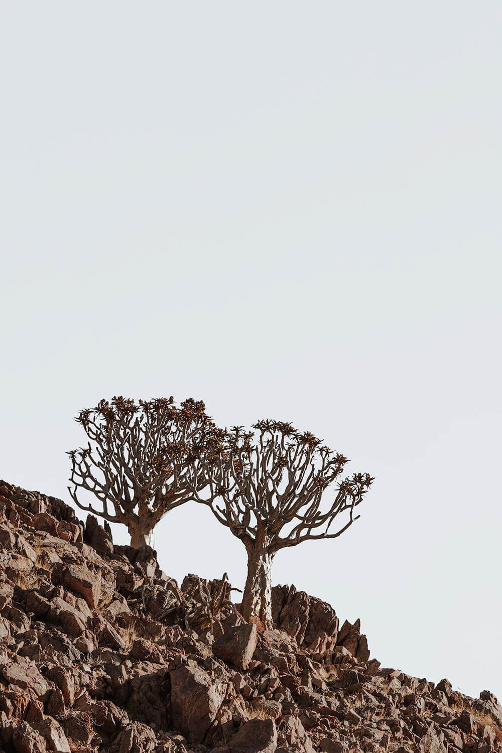 Quiver trees at the Kanaan Desert Retreat, an eco accommodation in Southern Namibia