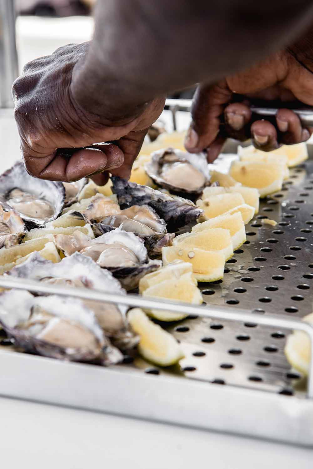 Fresh oysters on a dolphin cruise from Swakopmund