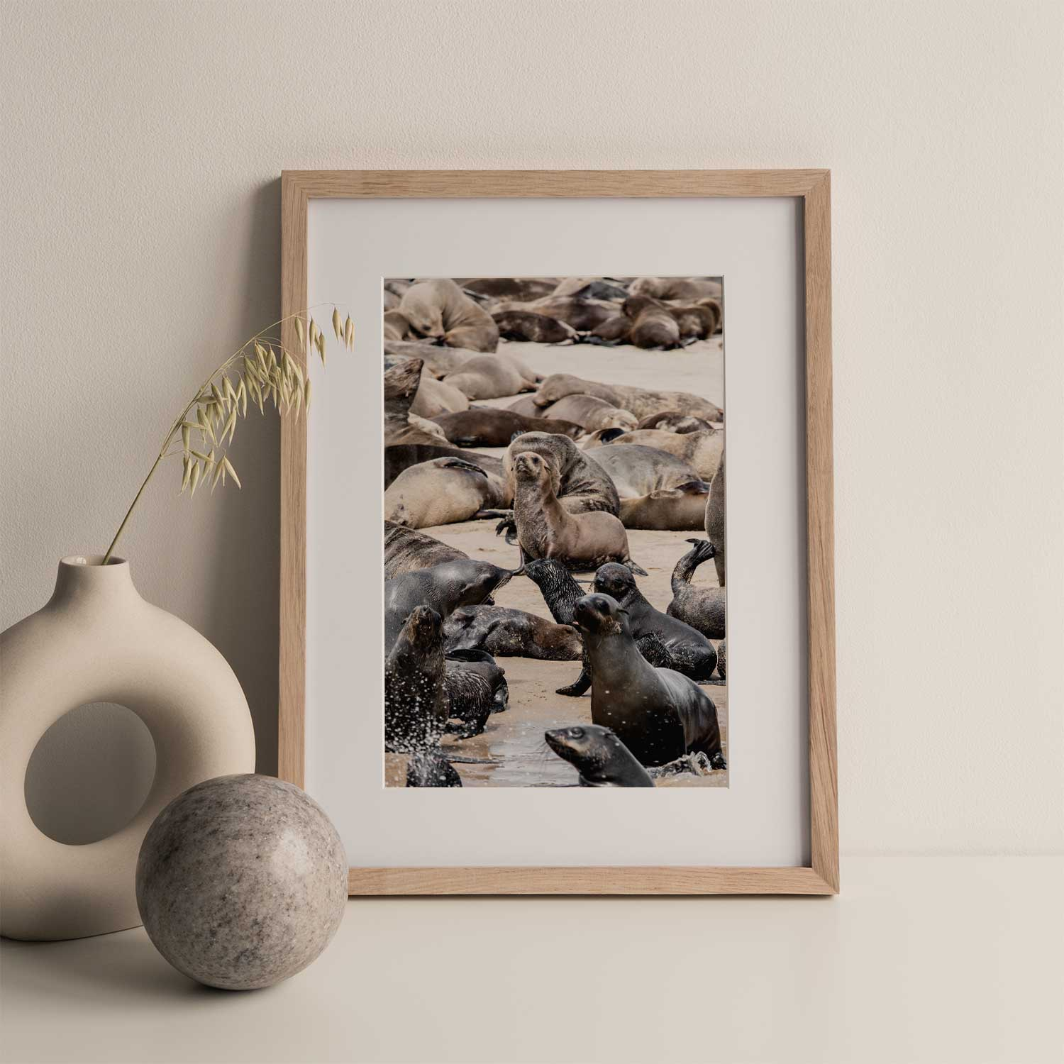 Cape Fur seals Gallery Print Set