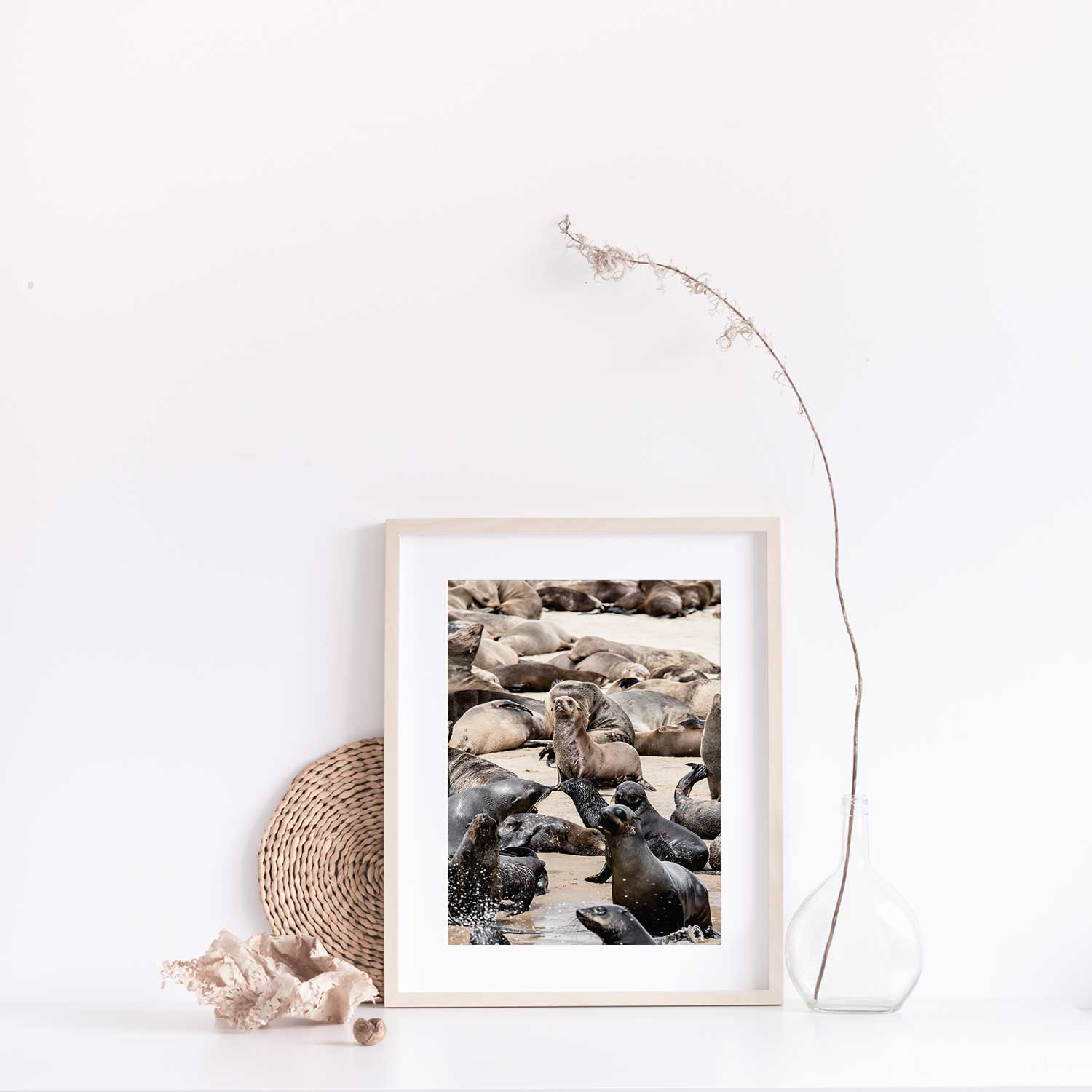 Cape Fur Seals print with Gift Box