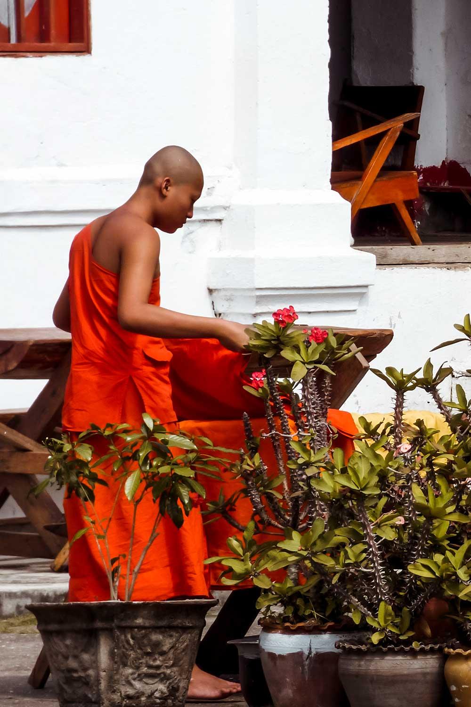 Bhuddist scenes in Luang Prabang