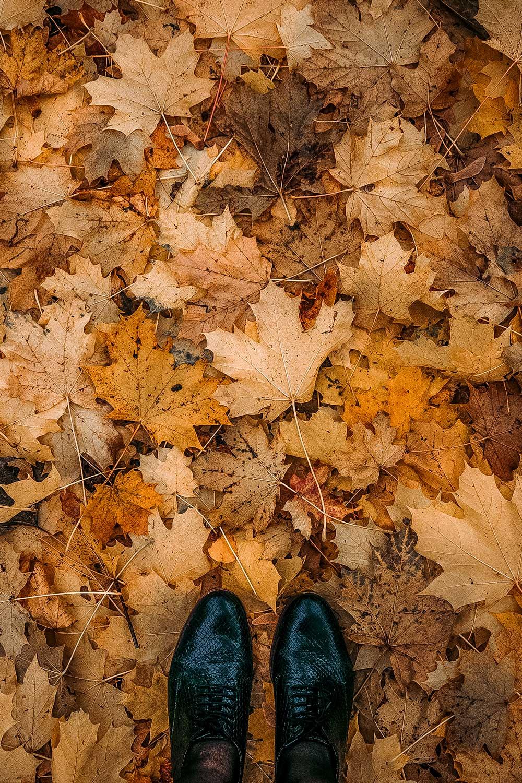 Autumn colors everywhere!