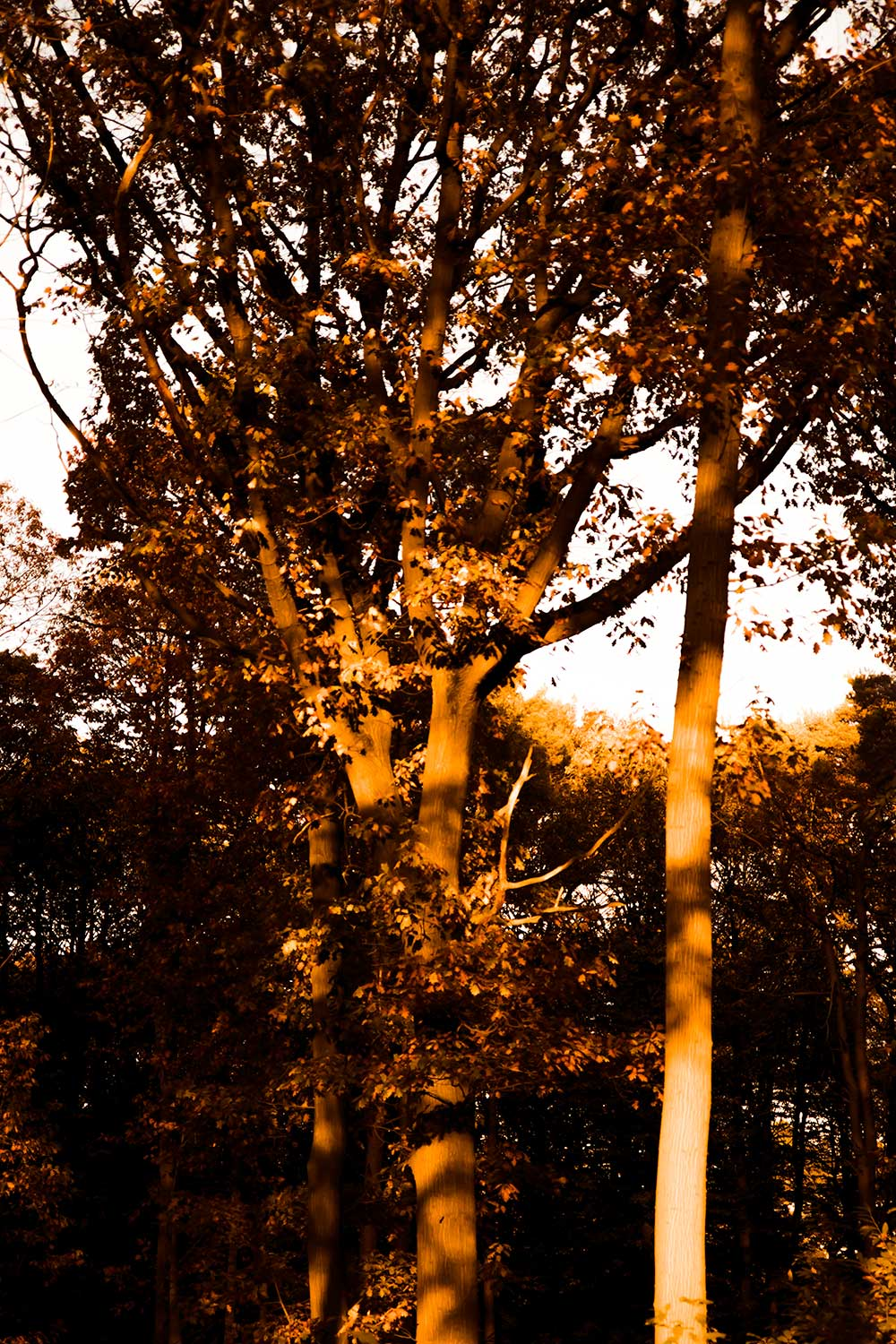 Sunset golden glow in the surrounding forest
