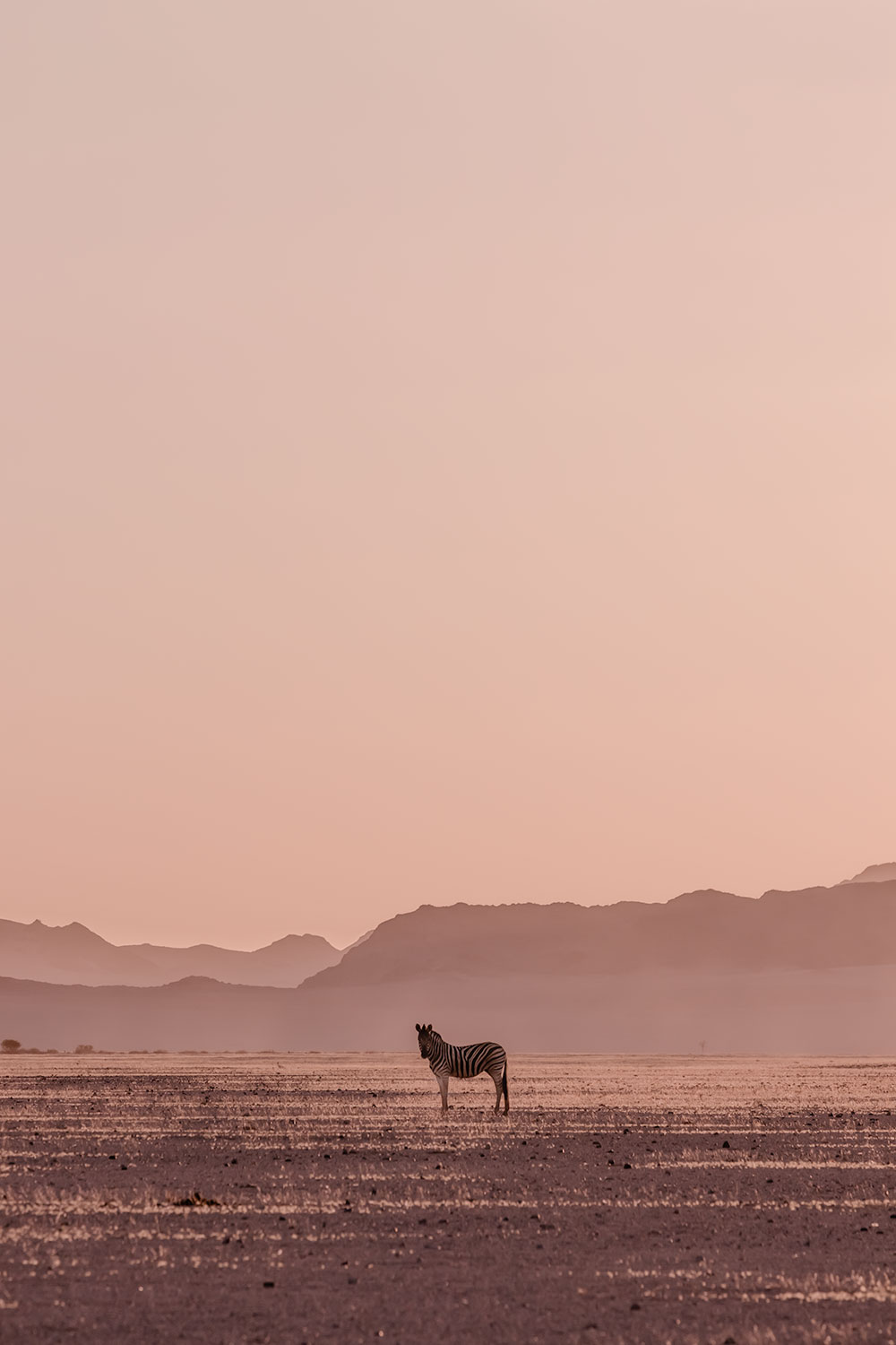 No shortage of Zebra spotting when spending 2 days in Sossusvlei