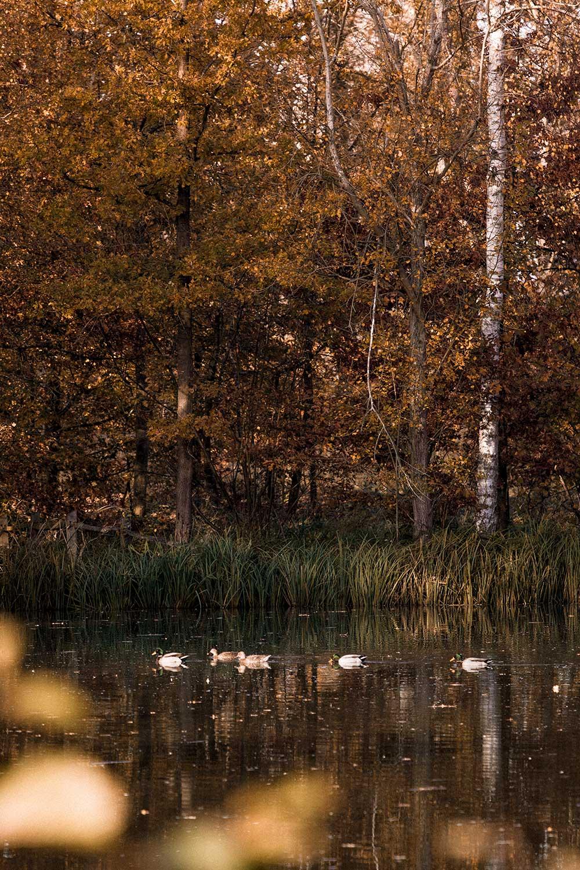 Magical morning sights at the lake