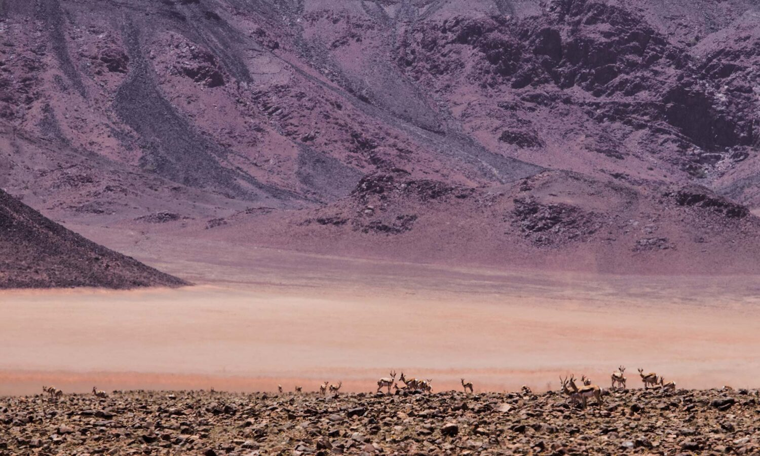 Tiny animals contrasting with imposing surrounding Namibian landscape